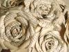 Paper roses, www.etsy.com