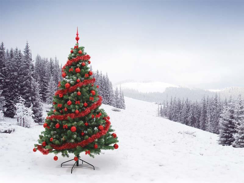 the classic christmas tree debate - The Christmas Tree
