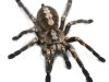 in-fear-and-trembling-spider
