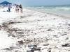 oil-shore