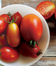 Time to Talk Tomatoes